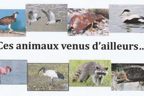 Ces animaux venus d'ailleurs