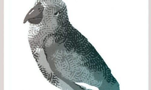 le-sacre-du-perroquet-1000x1000